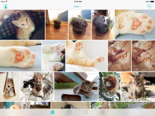 典型的App使用案例,看不完的貓咪相片。